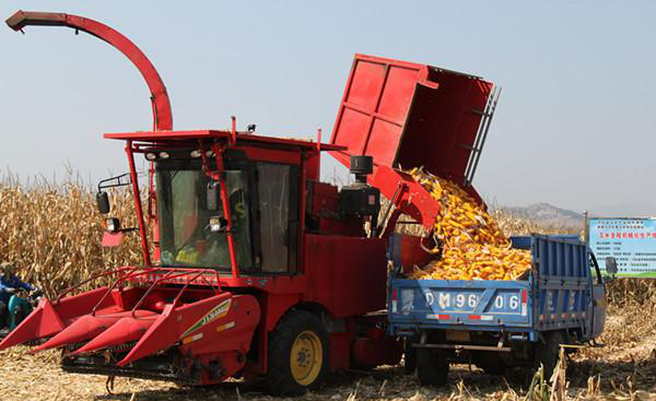 Holding A Demonstration Meeting Of Farm Corn Combine Harvester
